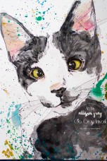Cat 4 - Copy