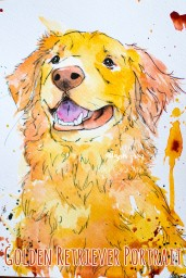 Golden Retriever 1 - Copy