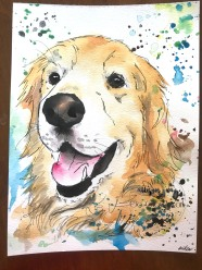 Golden Retriever 8
